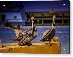 Pelican's Roost Acrylic Print by Barry Jones