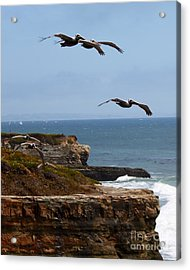 Acrylic Print featuring the photograph Pelicans by Theresa Ramos-DuVon