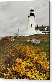 Pemaquid Point Lighthouse And Sea Roses Acrylic Print by David Smith