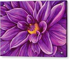 Pencil Dahlia Acrylic Print