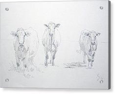 Pencil Drawing Of Three Cows Acrylic Print