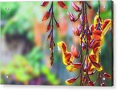 Pending Flowers Acrylic Print