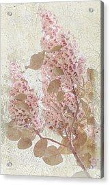 Penelope Acrylic Print by Elaine Teague