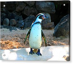 Acrylic Print featuring the photograph Penguin by Kristine Merc