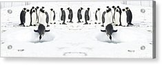 Acrylic Print featuring the photograph Penguin Lunch Time by R Muirhead Art