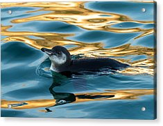 Penguin Watercolor 2 Acrylic Print