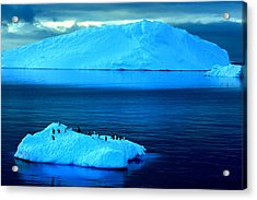 Penguins On Iceberg Acrylic Print