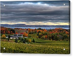 Peninsula Vineyard Acrylic Print