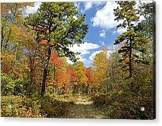 Pennsylvania Forest In Autumn Pocono Mountains Acrylic Print