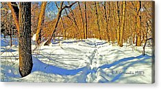 Acrylic Print featuring the photograph Pennsylvania Forest In Winter by A Gurmankin