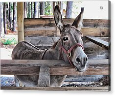 Penny Ann Acrylic Print by Victor Montgomery