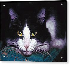 Pensive Cat Acrylic Print