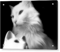 Acrylic Print featuring the photograph Pensive Turkish Angora by Aurelio Zucco