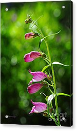 Acrylic Print featuring the photograph Penstemon by Karen Slagle