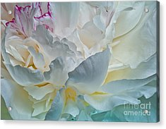 Acrylic Print featuring the photograph Peonie 2012 by Art Barker