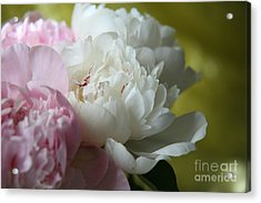Acrylic Print featuring the photograph Peonies by Lynn England