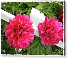 Peonies Resting On White Fence Acrylic Print by Barbara Griffin