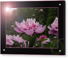 Acrylic Print featuring the photograph Peony Garden Sun Flare by Patti Deters