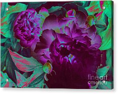 Peony Passion Acrylic Print by First Star Art