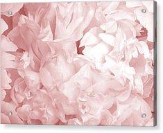 Peony Pink Beauty Acrylic Print