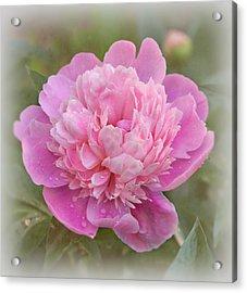 Peony - Pink Acrylic Print by Sandy Keeton