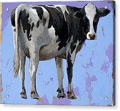 People Like Cows #11 Acrylic Print by David Palmer