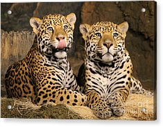 People Look Tasty. Acrylic Print by Eric Curtin