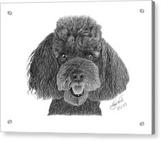 Acrylic Print featuring the drawing Pepper - 020 by Abbey Noelle