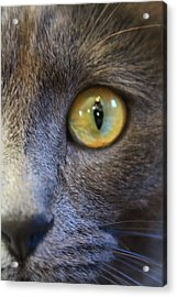 Pepper's Eye Acrylic Print by Alicia Knust