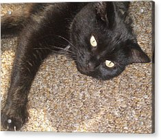 Pepsi Black Cat Found The Hot Spot Acrylic Print