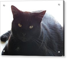 Pepsi The Lucky Black Cat Acrylic Print