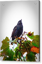 Perched Aloft Acrylic Print by Glenn Feron