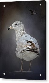 Perched Nearby Acrylic Print by Jai Johnson