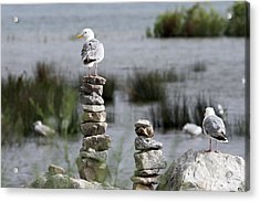 Perched On A Rock Cairn Acrylic Print