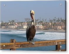 Perched On The Pier Acrylic Print