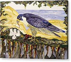 Peregrine Falcon Feeding Chicks Acrylic Print by Alexandra  Sanders
