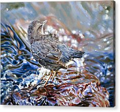 Perfect Camouflage  Acrylic Print by Dianna Ponting