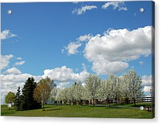 Perfect Day Acrylic Print by Aimee L Maher Photography and Art Visit ALMGallerydotcom