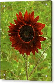 Perfect Imperfection Acrylic Print