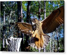 Perfect Landing Acrylic Print by Paulette Thomas