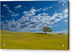 Acrylic Print featuring the photograph Perfect Landscape by Rima Biswas
