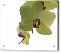 Perfect Moments Orchid  Acrylic Print by Inspired Nature Photography Fine Art Photography