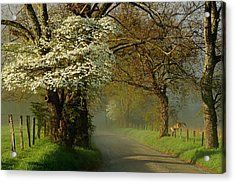 A Perfect Morning Acrylic Print by Deb Campbell