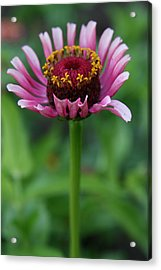 Perfect Posture  Acrylic Print by Neal Eslinger
