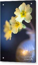 Perfect Primrose Acrylic Print by Jan Bickerton
