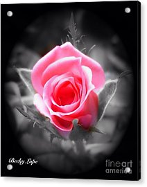 Perfect Rosebud In Black Acrylic Print by Becky Lupe