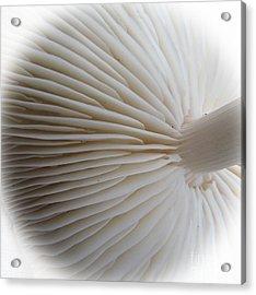 Perfect Round White Mushroom Acrylic Print by Tina M Wenger