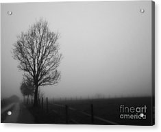 Perfect Sense II Acrylic Print