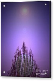 Acrylic Print featuring the photograph Perfectly Purple by Chris Anderson