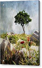 Pergamum's Tree Acrylic Print by MaryJane Armstrong